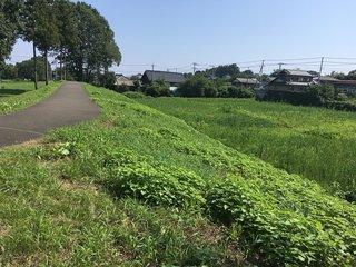 20190825hachigata_takasaki081.jpg
