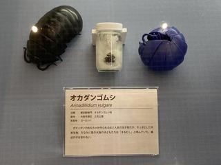 20200611shizenshi019.jpg
