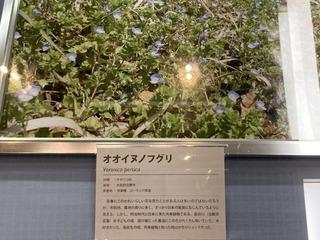 20200611shizenshi021.jpg
