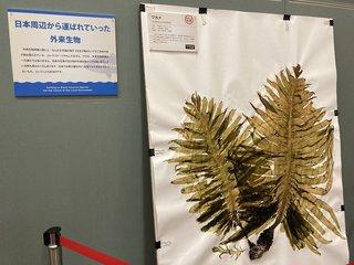 20200611shizenshi022.jpg